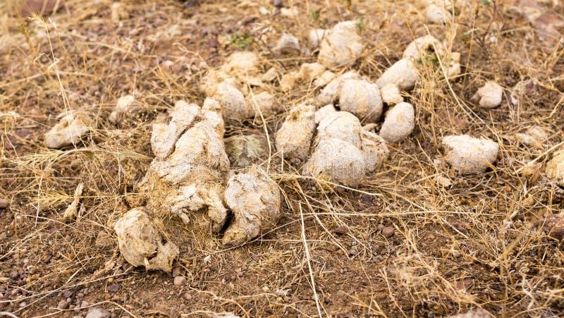 Περιττώματα αλόγων στο έδαφος στοκ φωτογραφία