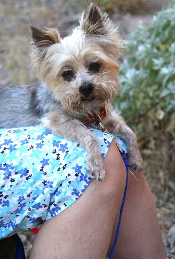 Download περιτύλιξη σκυλιών στοκ εικόνες. εικόνα από ένωση, γούνα - 120564