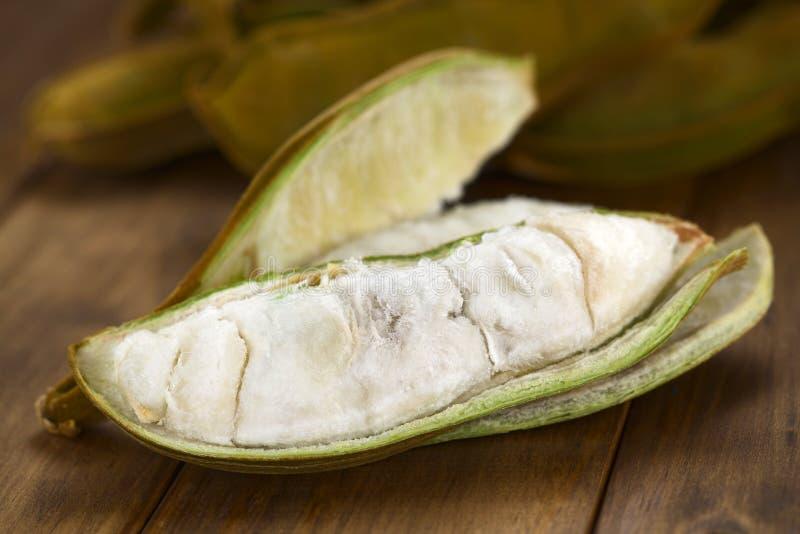 Περουβιανά φρούτα αποκαλούμενα Pacay στοκ φωτογραφίες με δικαίωμα ελεύθερης χρήσης