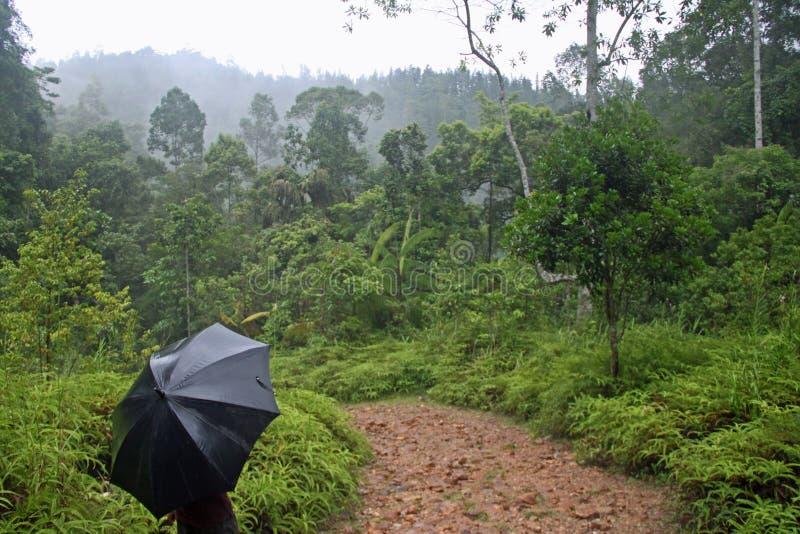 Περπάτημα μέσω του τροπικού δάσους Sinharaja περιοχών παγκόσμιων κληρονομιών της ΟΥΝΕΣΚΟ στη Σρι Λάνκα στοκ φωτογραφία