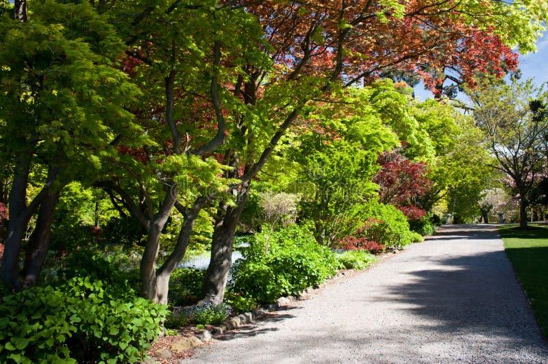 Περπάτημα μέσω των βοτανικών κήπων Christchurch στη Νέα Ζηλανδία στοκ φωτογραφία με δικαίωμα ελεύθερης χρήσης