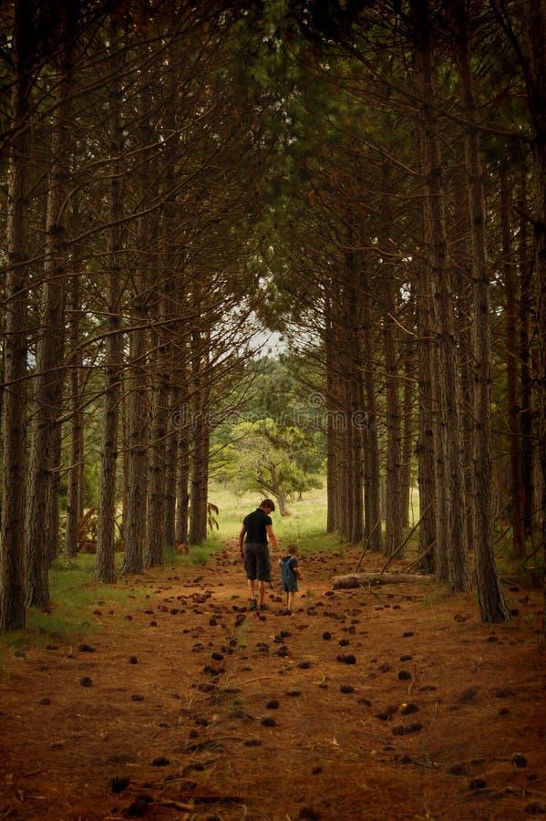 περπάτημα πεύκων διαδρόμων στοκ φωτογραφίες