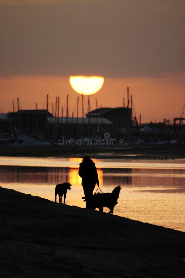περπάτημα σκυλιών παραλιών στοκ εικόνα