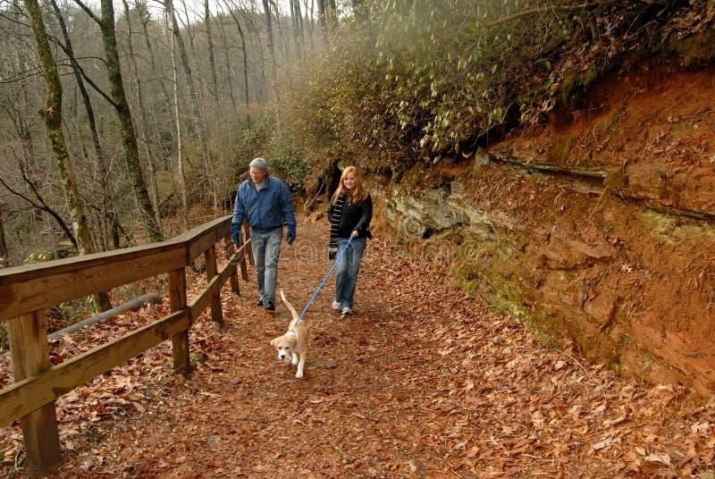 περπάτημα σκυλιών φθινοπώρ& στοκ φωτογραφία