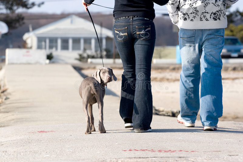 περπάτημα σκυλιών στοκ εικόνες