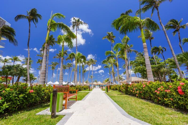 Περπάτημα της πορείας με τους φοίνικες στην τροπική παραλία στοκ φωτογραφία με δικαίωμα ελεύθερης χρήσης