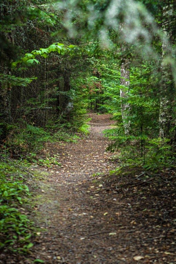 Περπάτημα της πορείας στο δάσος στοκ φωτογραφία