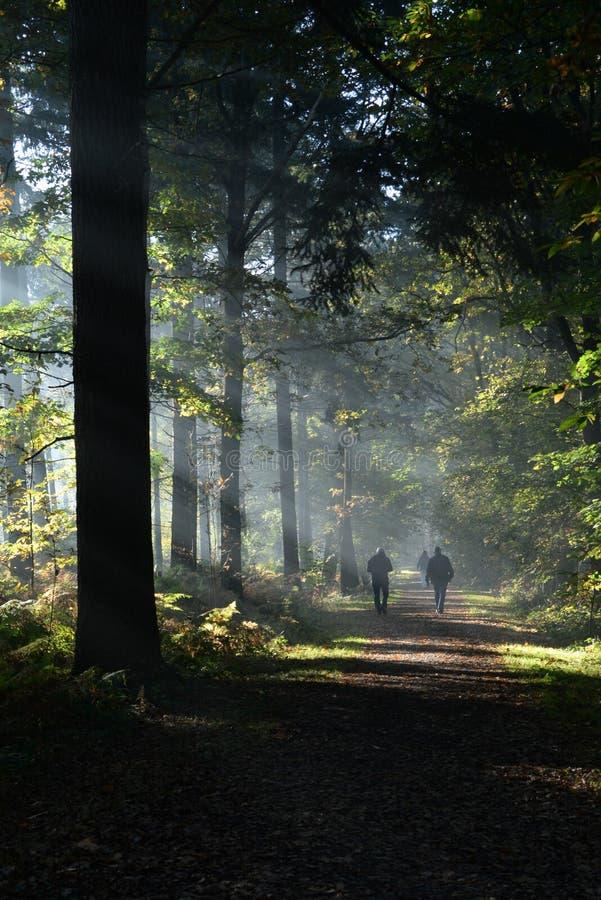 Περπάτημα του μαξιλαριού s στον πιό forrest με τις ηλιαχτίδες στους ανθρώπους στοκ εικόνες