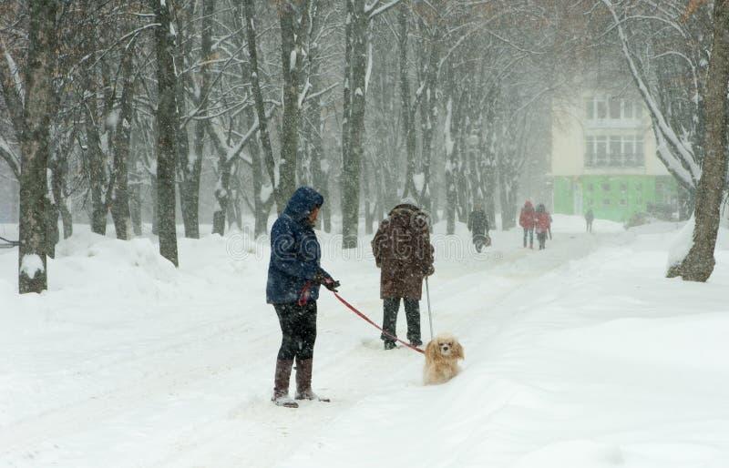 Περπάτημα του σκυλιού μέσω του χιονισμένου πάρκου κατά τη διάρκεια μιας χιονοθύελλας στοκ εικόνα