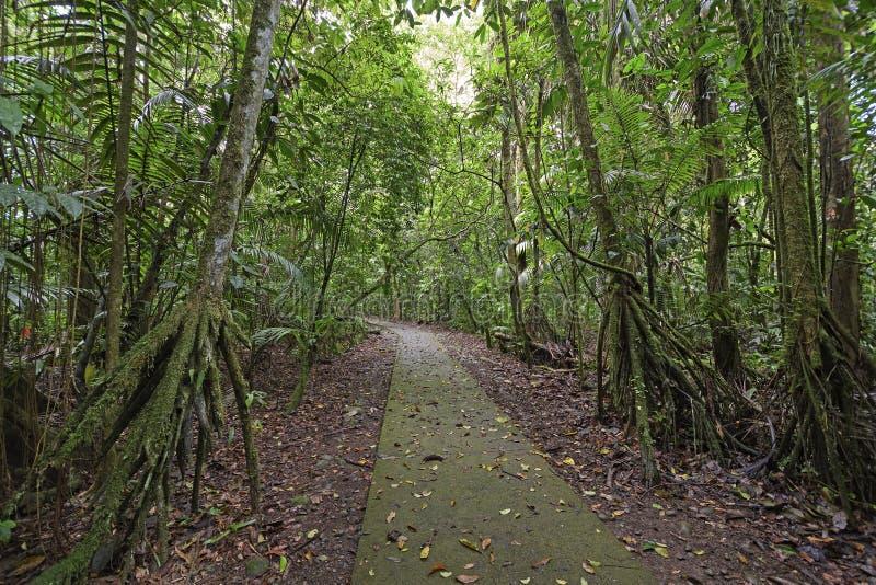 Περπάτημα των φοινικών κατά μήκος μιας πορείας τροπικών δασών στοκ εικόνες