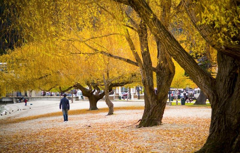 περπάτημα φθινοπώρου στοκ φωτογραφία