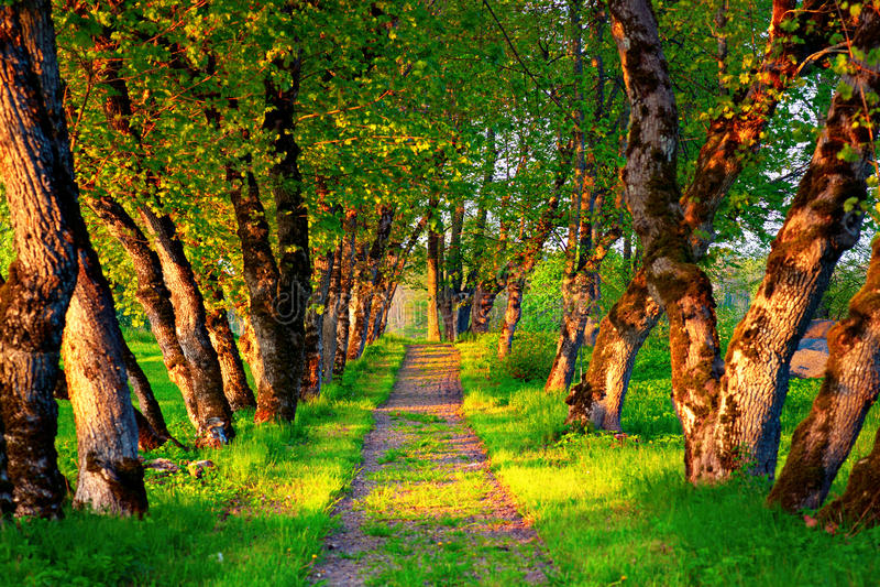 Περπατώντας μονοπάτι στοκ εικόνα με δικαίωμα ελεύθερης χρήσης