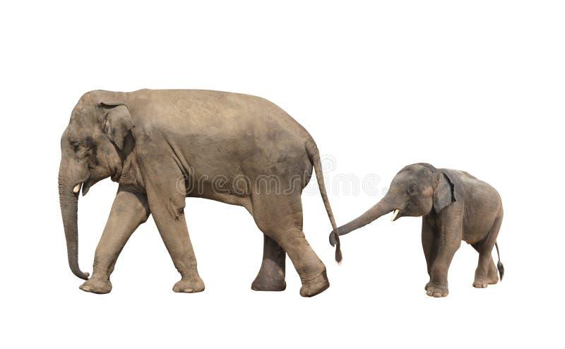 Περπατώντας οικογένεια του ελέφαντα - mom και μωρό στοκ εικόνες