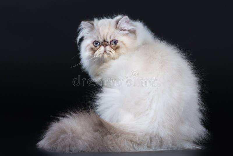 περσική γάτα στοκ φωτογραφίες με δικαίωμα ελεύθερης χρήσης