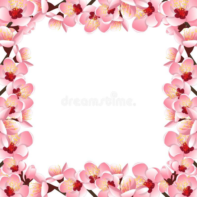 Περσική προύμνη - σύνορα ανθών λουλουδιών ροδάκινων που απομονώνονται στο άσπρο υπόβαθρο επίσης corel σύρετε το διάνυσμα απεικόνι διανυσματική απεικόνιση