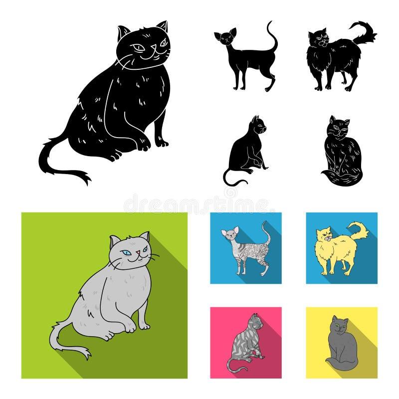 Περσικό, Cornish rex και άλλα είδη Οι φυλές γατών θέτουν τα εικονίδια συλλογής στο μαύρο, επίπεδο απόθεμα συμβόλων ύφους διανυσμα απεικόνιση αποθεμάτων