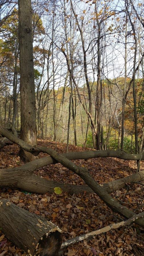 πεσμένα δέντρα στοκ εικόνες