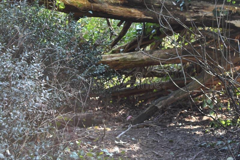 Πεσμένα δέντρα στο δάσος στοκ φωτογραφία