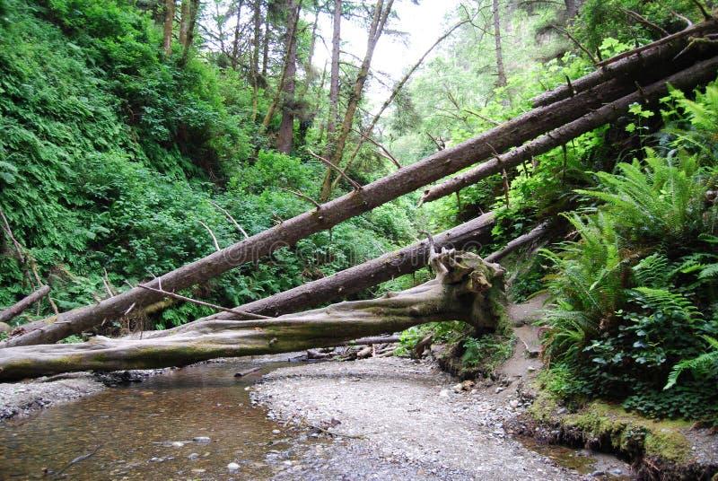 πεσμένα δέντρα στοκ εικόνα