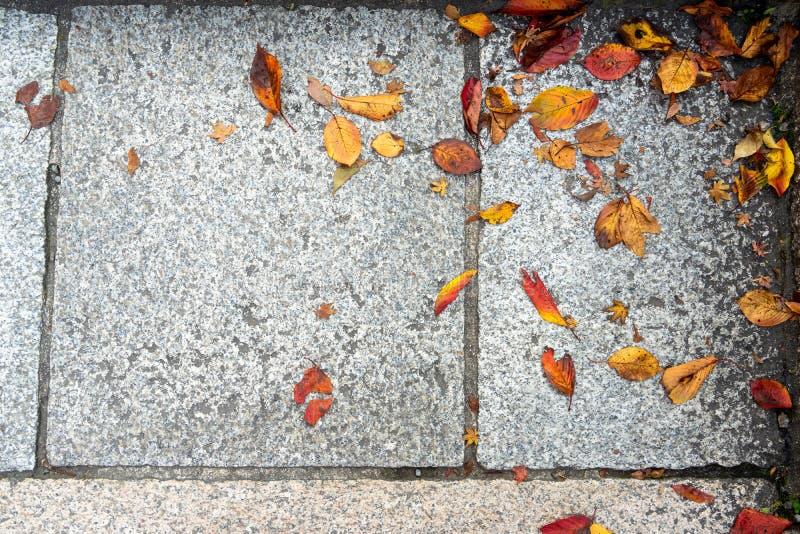Πεσμένα ζωηρόχρωμα φύλλα φθινοπώρου στο ανοικτό γκρι υπόβαθρο σύστασης πεζοδρομίων γρανίτη, Κιότο στοκ εικόνες