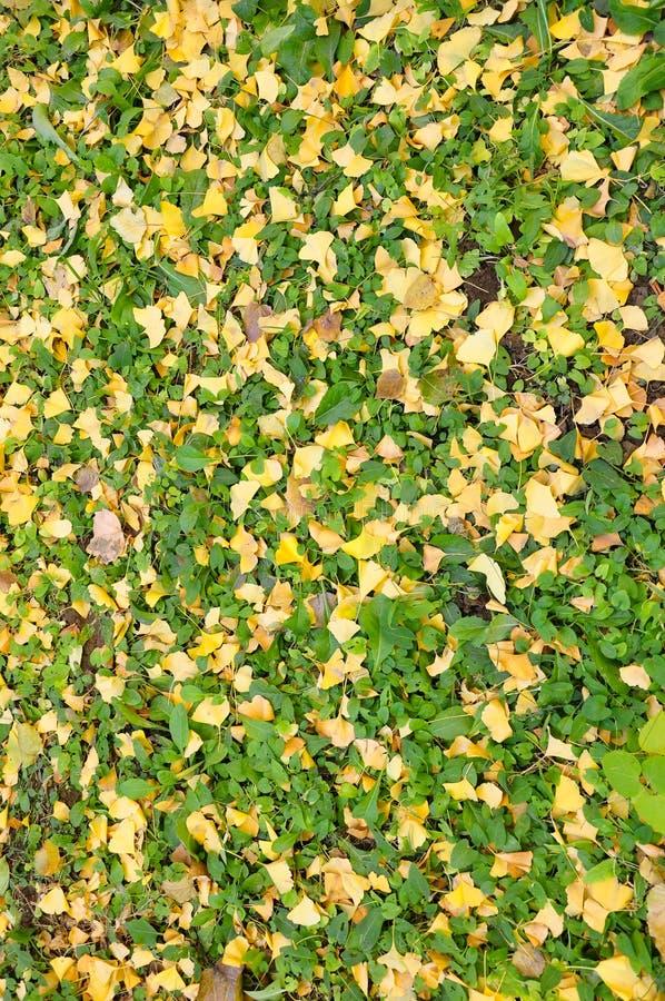 Πεσμένα φθινόπωρο φύλλα στο έδαφος στοκ φωτογραφία με δικαίωμα ελεύθερης χρήσης