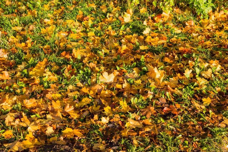 πεσμένα φθινόπωρο φύλλα στοκ εικόνα