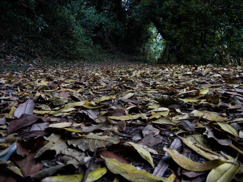 Πεσμένα φύλλα στο δασικό πάτωμα στοκ φωτογραφίες