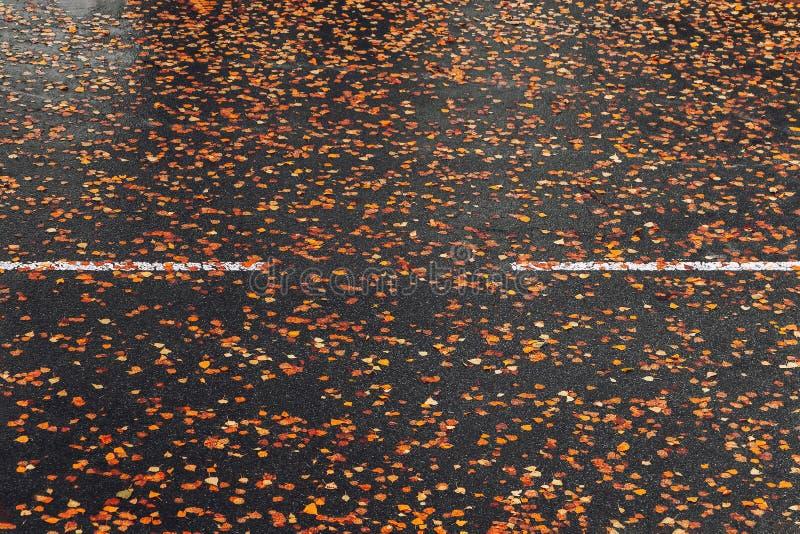 Πεσμένα φύλλα φθινοπώρου στην υγρή άσφαλτο στοκ φωτογραφίες