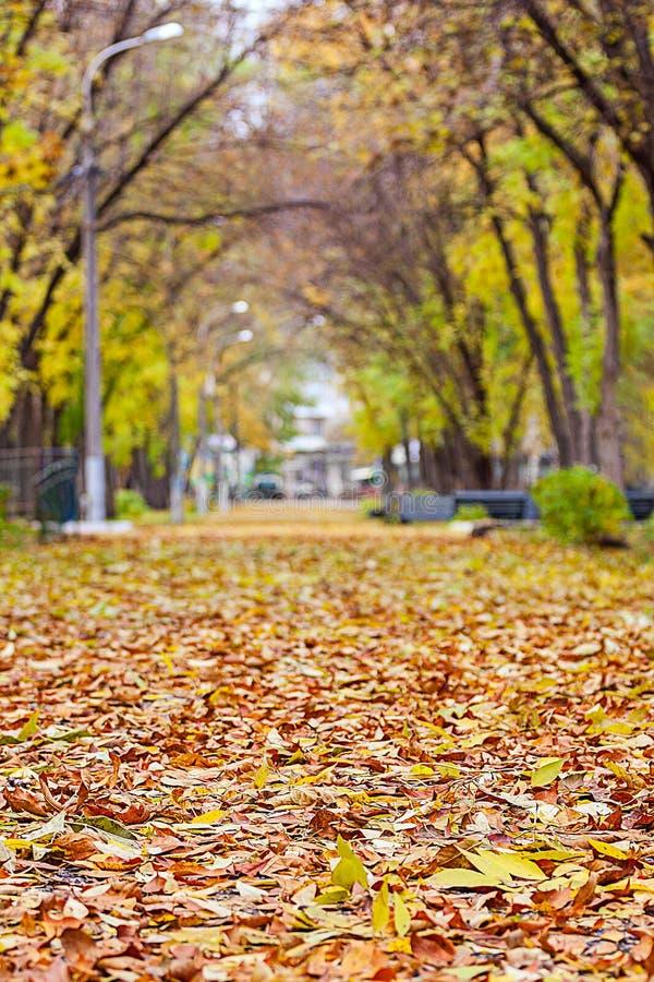 Πεσμένα φύλλα στην αλέα στοκ φωτογραφία με δικαίωμα ελεύθερης χρήσης