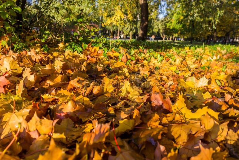 Πεσμένα φύλλα φθινοπώρου στη χλόη στοκ εικόνες