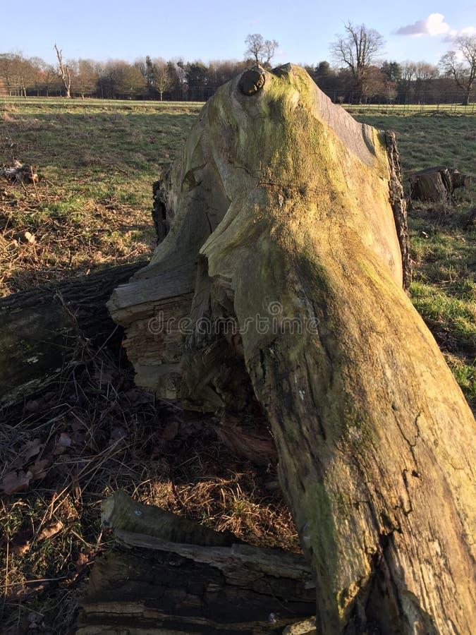 Πεσμένη αρχαία δρύινη σύνδεση τα λιβάδια στοκ εικόνα