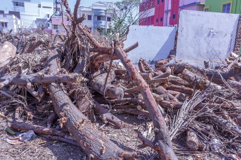 Πεσμένος κλάδος δέντρων περιορίζοντας στα κομμάτια στοκ φωτογραφίες