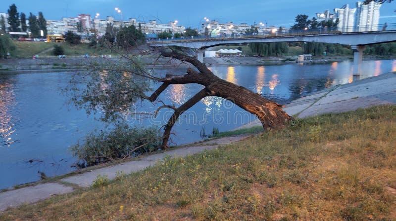 πεσμένο δέντρο από τον ποταμό στοκ φωτογραφία