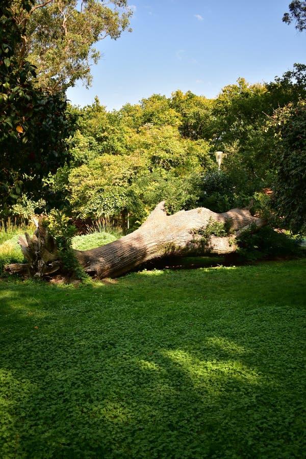 Πεσμένο δέντρο στη χλόη στο αστικό πάρκο compostela de Σαντιάγο Ισπανία στοκ φωτογραφία με δικαίωμα ελεύθερης χρήσης