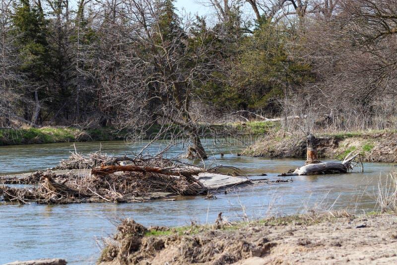 Πεσμένο δέντρο στον ποταμό Νεμπράσκα Platte στοκ εικόνες