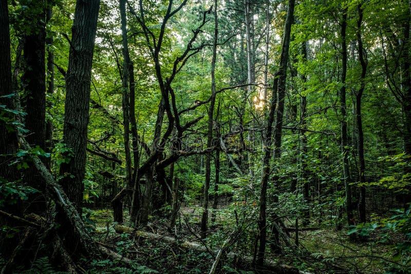 Πεσμένο δέντρο Gnarly απολύτως σε ένα σκιερό δάσος στοκ φωτογραφία με δικαίωμα ελεύθερης χρήσης