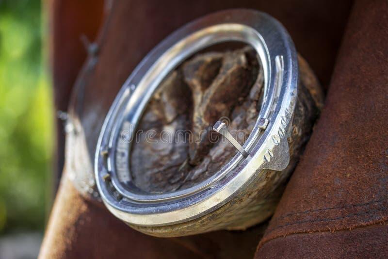 Πετάλωμα των αλόγων στοκ εικόνες