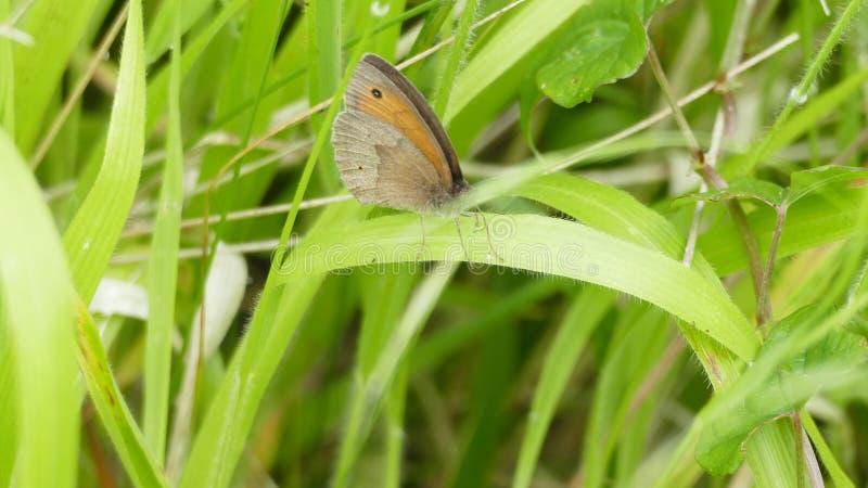 Πεταλούδα - ένα από το όμορφο και χαριτωμένο πλάσμα στον κόσμο στοκ φωτογραφίες με δικαίωμα ελεύθερης χρήσης