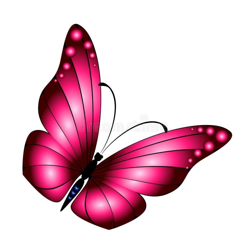 πεταλούδα εξωτική απεικόνιση αποθεμάτων