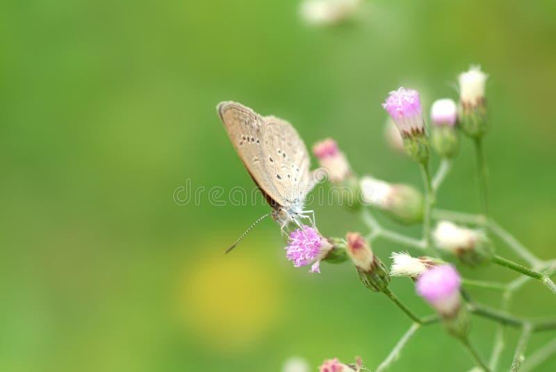 Download πεταλούδα ζωηρόχρωμη στοκ εικόνα. εικόνα από μύγα, λιβάδια - 2225079