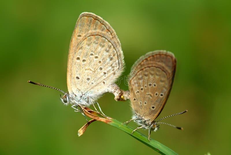 Download πεταλούδα ζωηρόχρωμη στοκ εικόνα. εικόνα από λουλούδια - 2225087