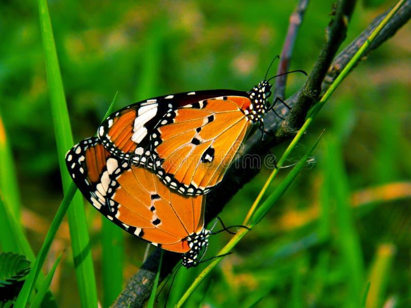 Πεταλούδα, η άγρια ομορφιά της φύσης στοκ εικόνες με δικαίωμα ελεύθερης χρήσης