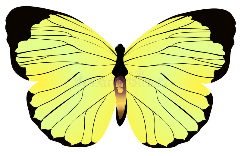 Download πεταλούδα κίτρινη απεικόνιση αποθεμάτων. εικονογραφία από πλάσμα - 13181449