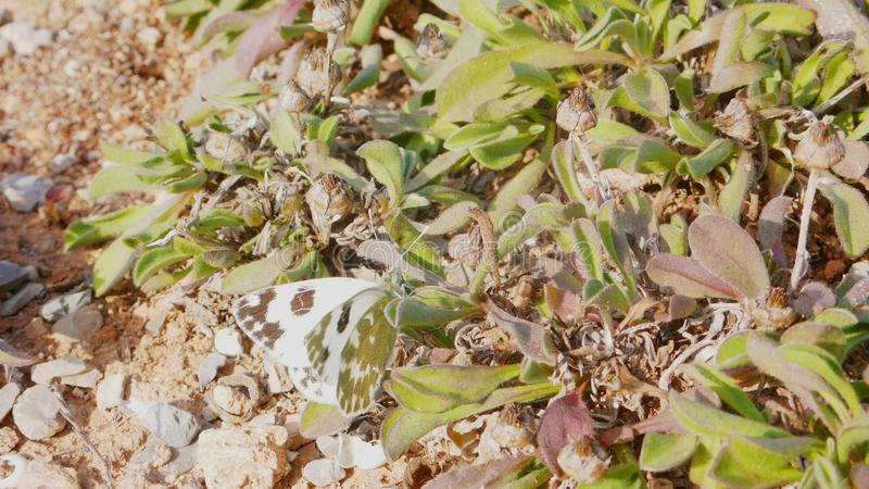 Πεταλούδα 3 λευκού λάχανων στοκ φωτογραφία με δικαίωμα ελεύθερης χρήσης