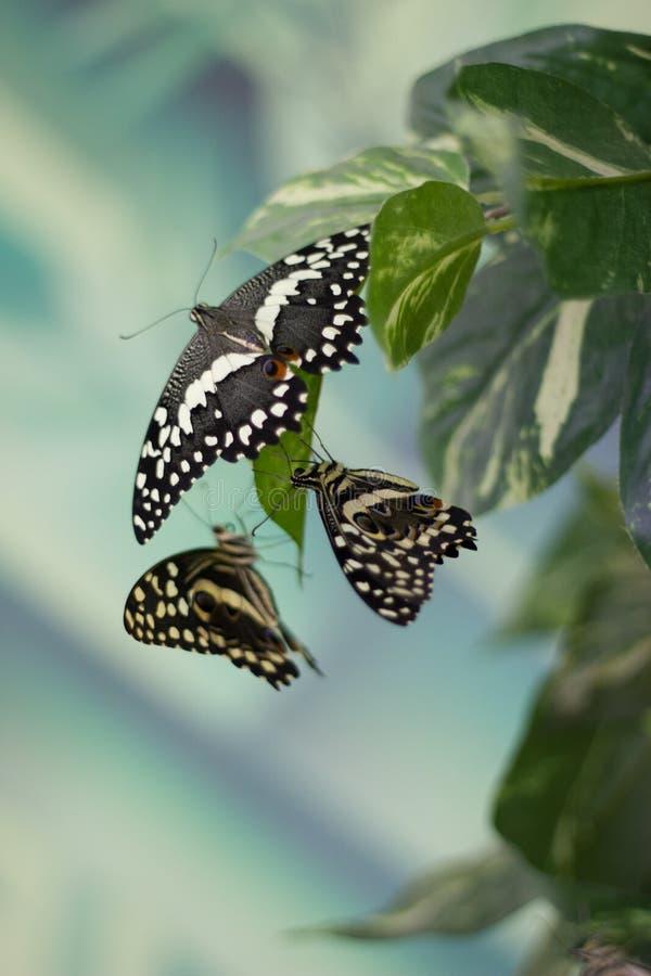 Πεταλούδα ομορφιάς στη φύση στοκ εικόνες