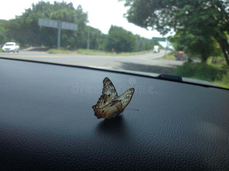 Πεταλούδα που σκαρφαλώνει στην εξόρμηση του αυτοκινήτου μου στοκ φωτογραφία με δικαίωμα ελεύθερης χρήσης