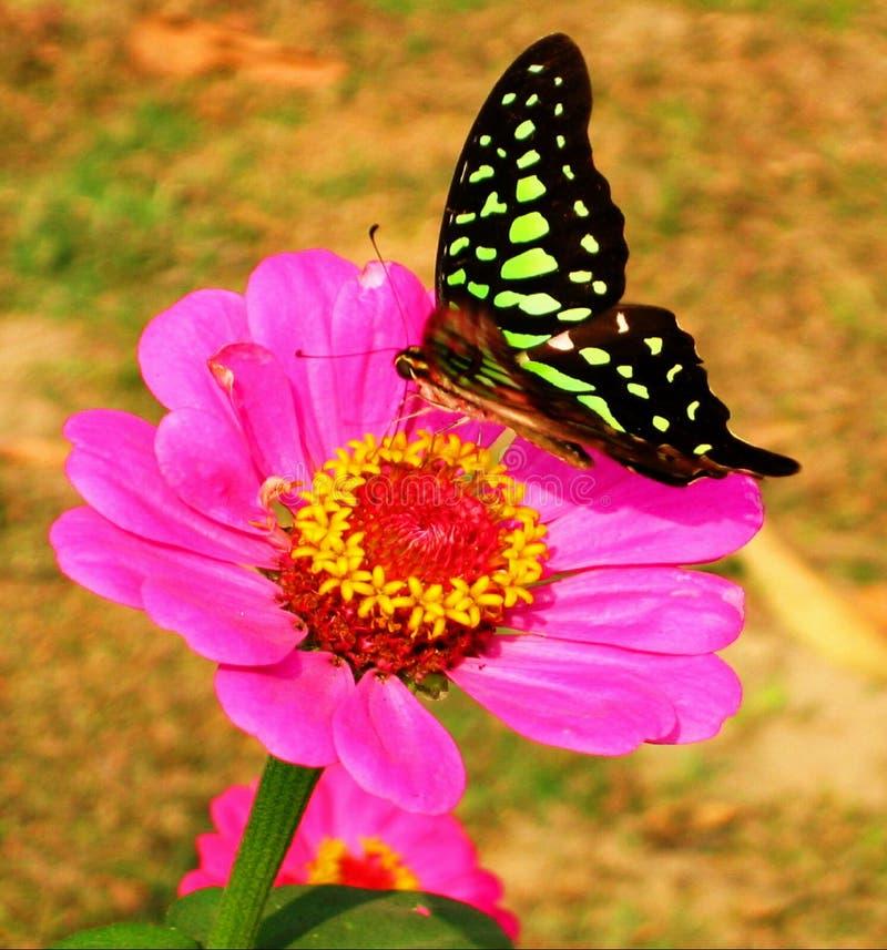 πεταλούδα σαφής Στοκ φωτογραφία με δικαίωμα ελεύθερης χρήσης