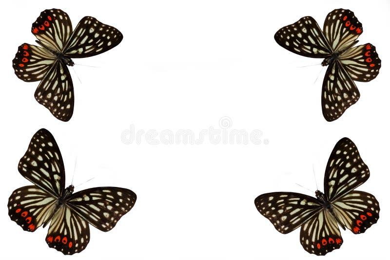 Πεταλούδα σε ένα καθαρό υπόβαθρο στοκ εικόνες