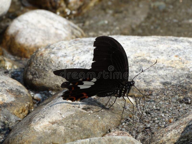 Πεταλούδα στήριξης που παίρνει μια στάση στοκ φωτογραφία με δικαίωμα ελεύθερης χρήσης
