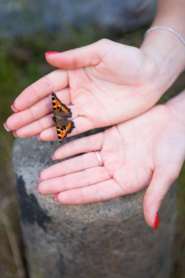 Πεταλούδα στα όμορφα θηλυκά χέρια με το κόκκινο μανικιούρ στοκ εικόνες με δικαίωμα ελεύθερης χρήσης